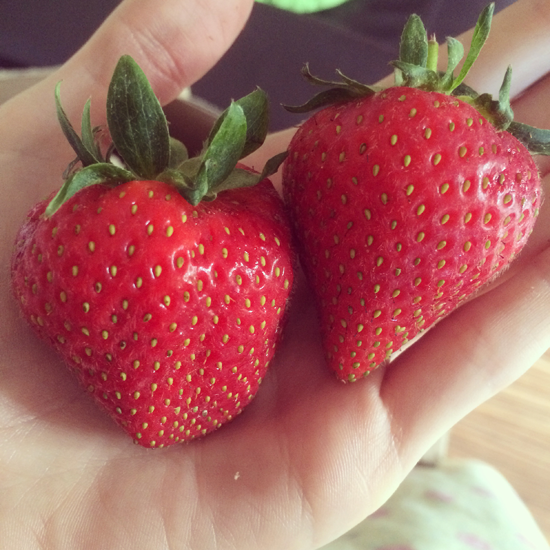Biggest-Strawberries-Ever